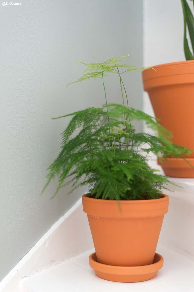 Plantetrend-LADY-7163-Minty-Breeze