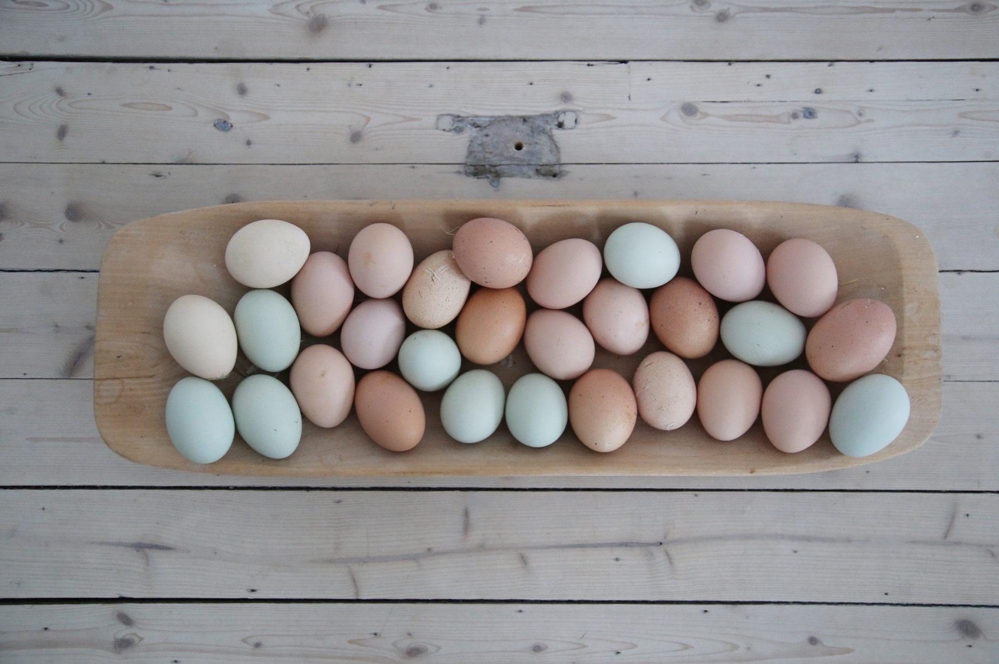 Hönor, ägg och pasteller